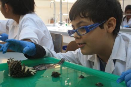 Con la iniciativa los niños tienen un acercamiento temprano con la ecología marina