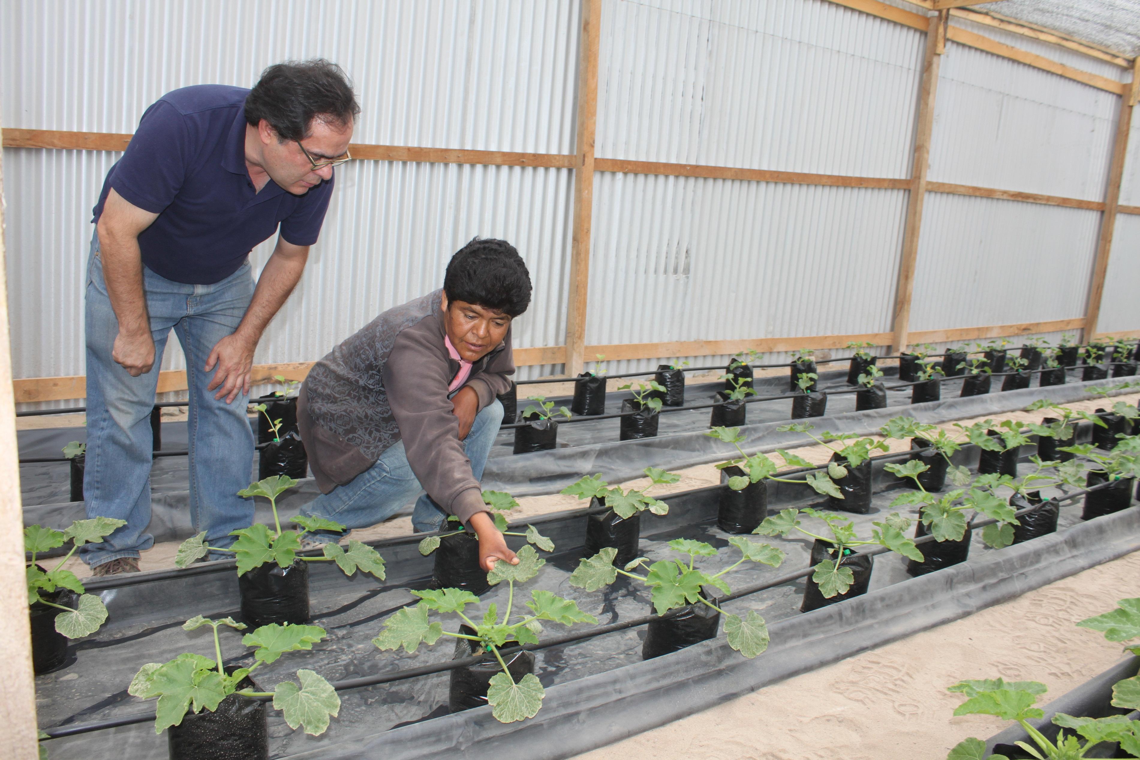 Expertos visitan cultivos hidrop nicos de alto la portada for Vivero antofagasta