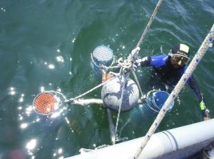 Profesionales de diversas áreas de las Ciencias del Mar se darán cita en el Congreso