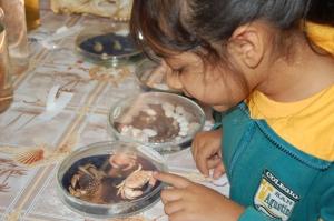 Como cada años la Facultad de Recursos del Mar abrió sus puertas a los niños de la comuna